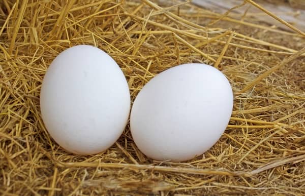 An image of two white eggs lying in hay.