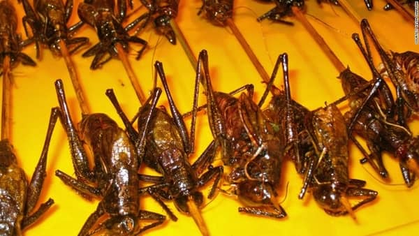 The Future of Food is in Thailand and its Cricket Farms