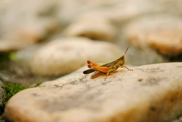 Insects- Food for the Future or the Present?