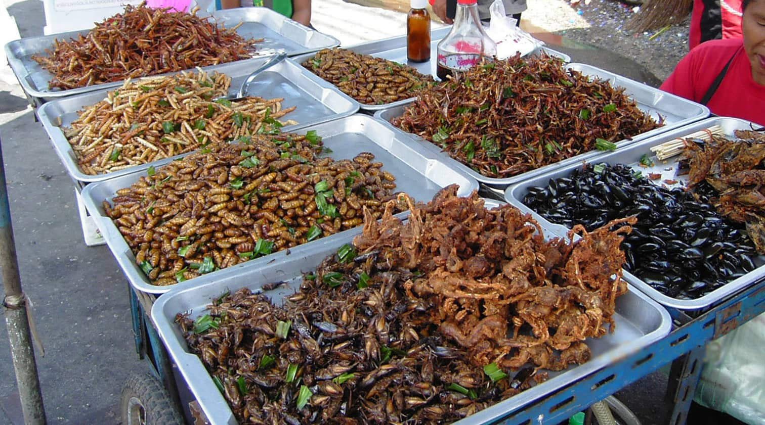 A stand with different types of insects.